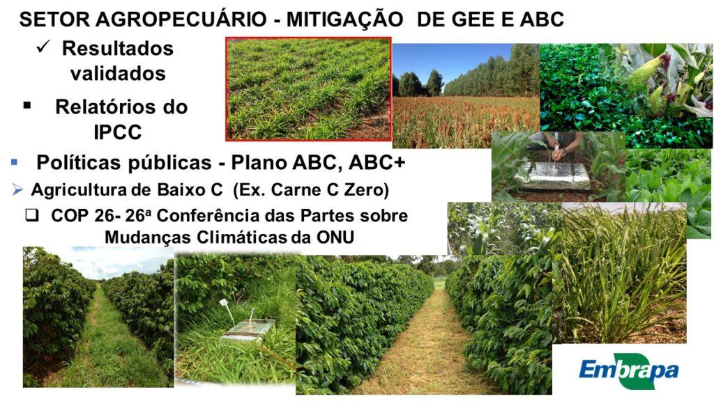 CNC amplia discussão sobre Carbono Neutro no café e acompanha de perto posição do Brasil na COP26